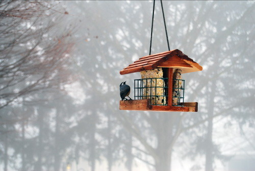 Choosing The Best Food For Your Winter Birds