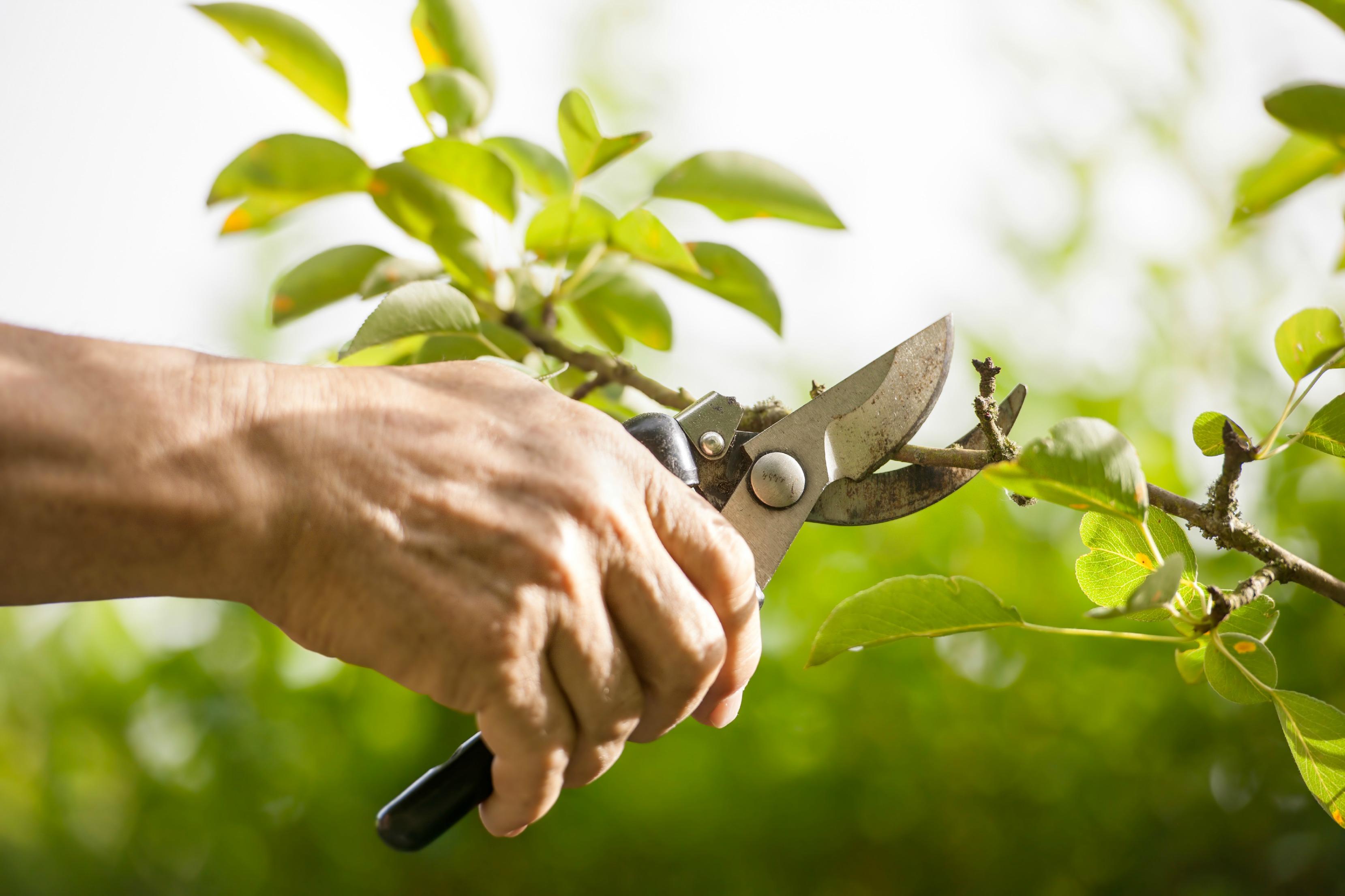 Spring Pruning Guide