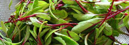 Greens Salad Oakridge fresh healthy eating growing herbs
