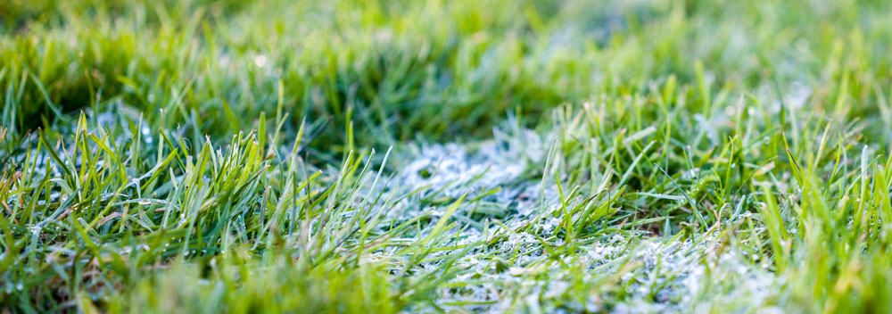 Snow Mould and Spring Lawn Care
