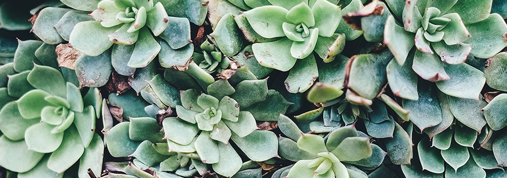 Keeping Your Succulent Alive and Happy