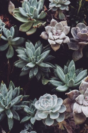 succulent neutrals plants houseplants care water light sun