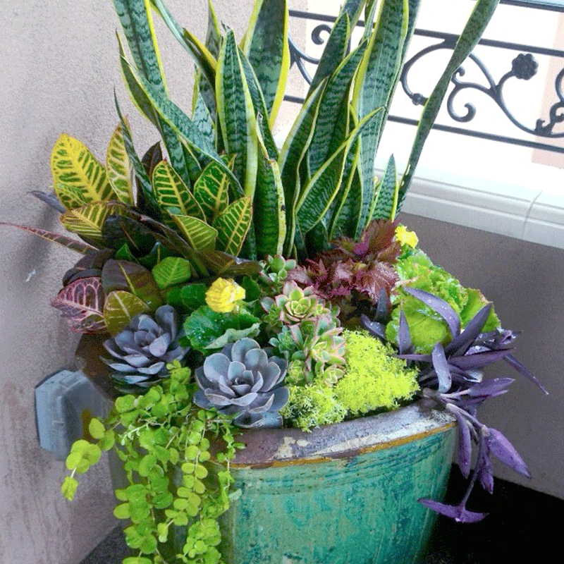 Container Gardening Trends