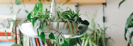Container Gardening Trends