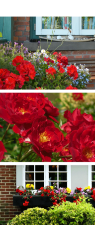 Oakridge Blog The Colours of Spring