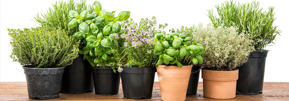 Kitchen Gardening Basics