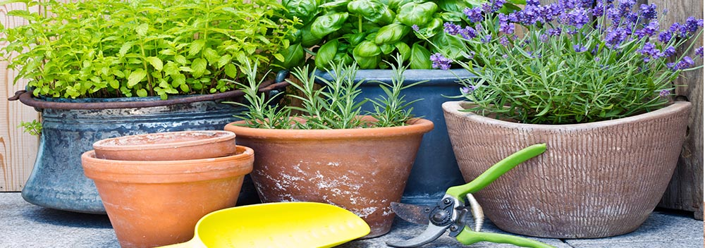 colourful herb garden containers