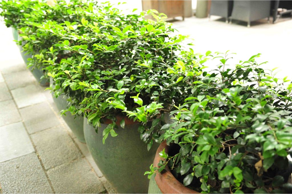 patio herb container garden