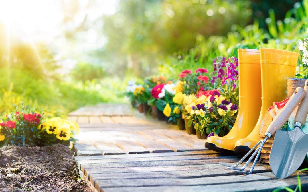 Saving Your Garden in a Heat Wave