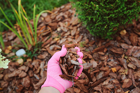 apply mulch to keep moisture in your garden