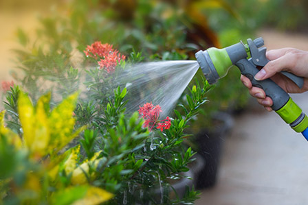 water your garden in the morning