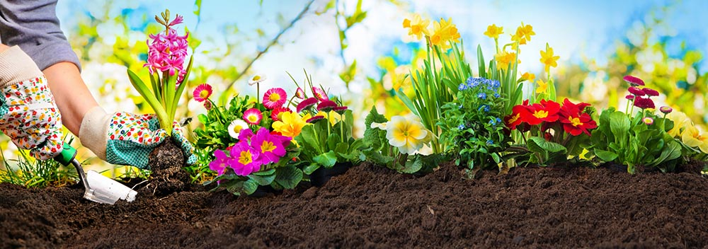 planting flowers in a flower bed