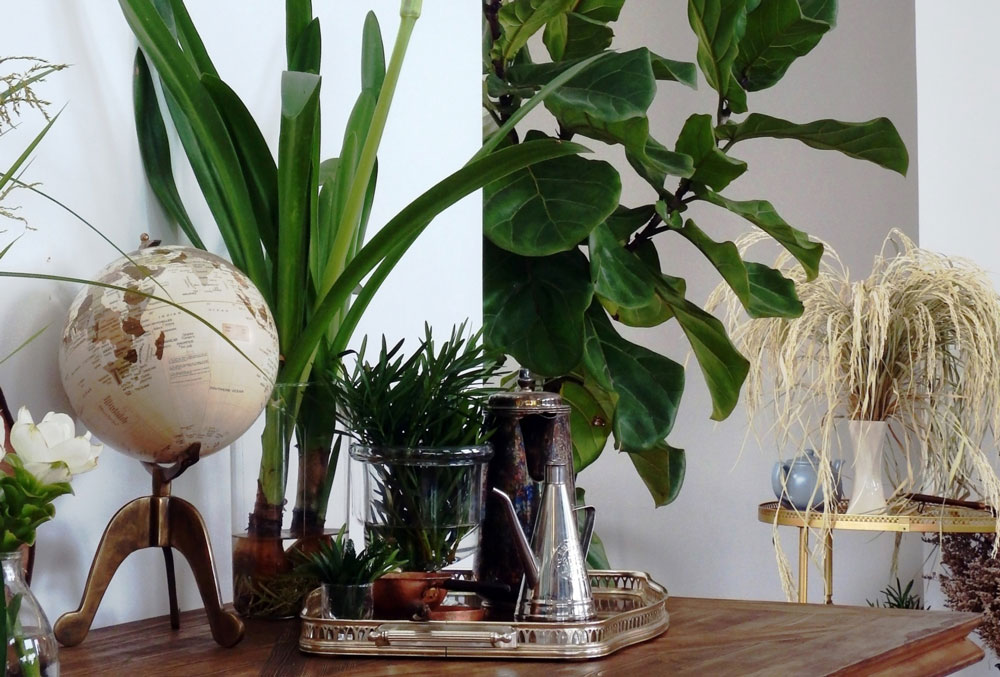 unique houseplants decorated in house