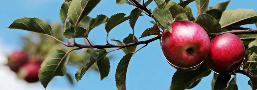 How to Grow an Orchard in Manitoba