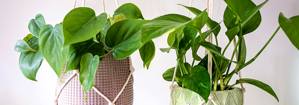 Transitioning Your Tropicals from Winter to Spring